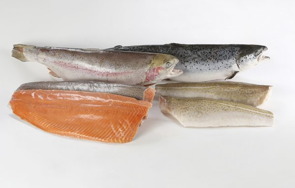 Salmon-trout-fillet